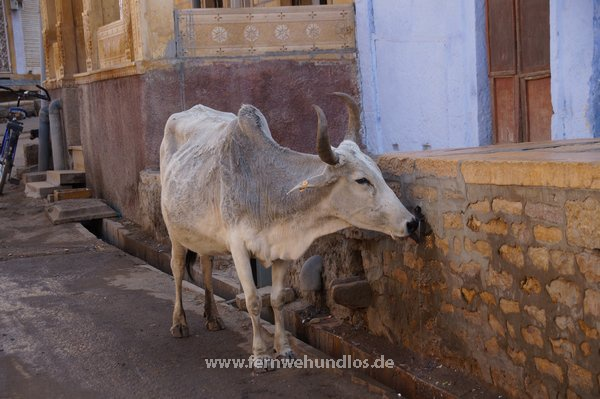 b_0_0_3549_10_images_stories_Asienfotos_indienbilder_1375_Altstadt-Jaisalmer.jpeg