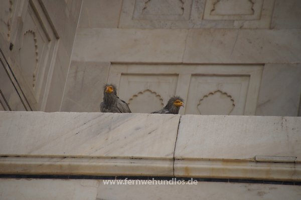 b_0_0_3549_10_images_stories_Asienfotos_indienbilder_4073_Taj-Mahal_Agra.jpeg