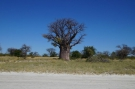 Baines-Baobabs