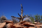Grand-View-Point-Trail_Canyonlands-NP