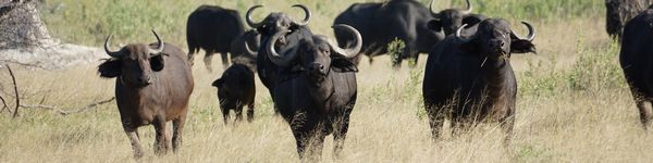 0289_Moremi-Game-Reserve_cr